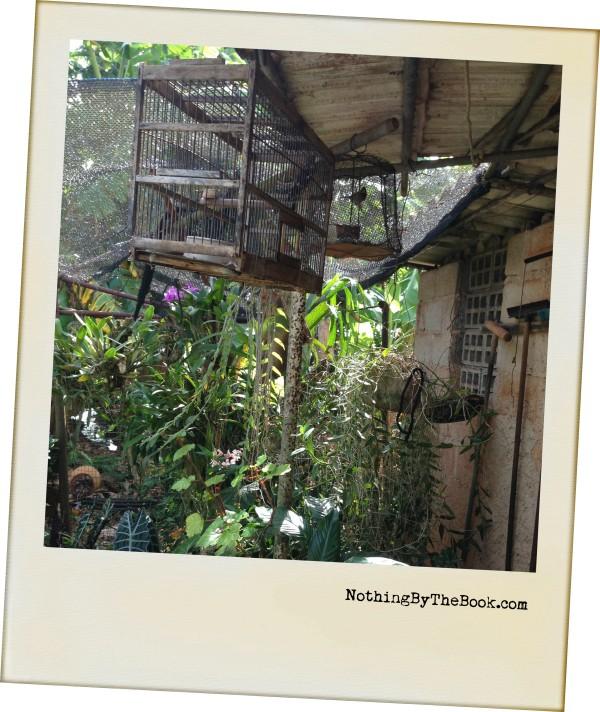 22-Birdcage