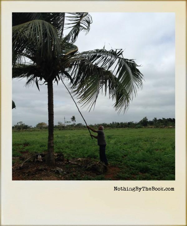 22-Coconut
