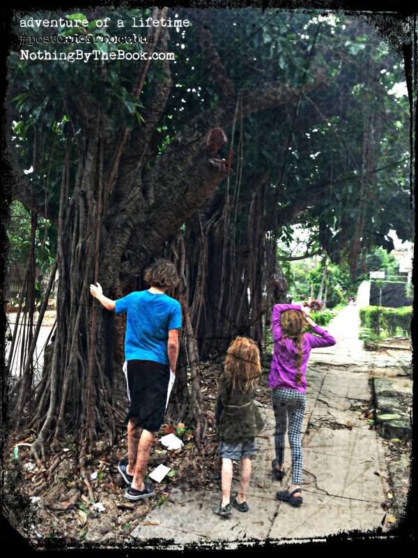2-11-a-sketchykidsonstreetbigtree
