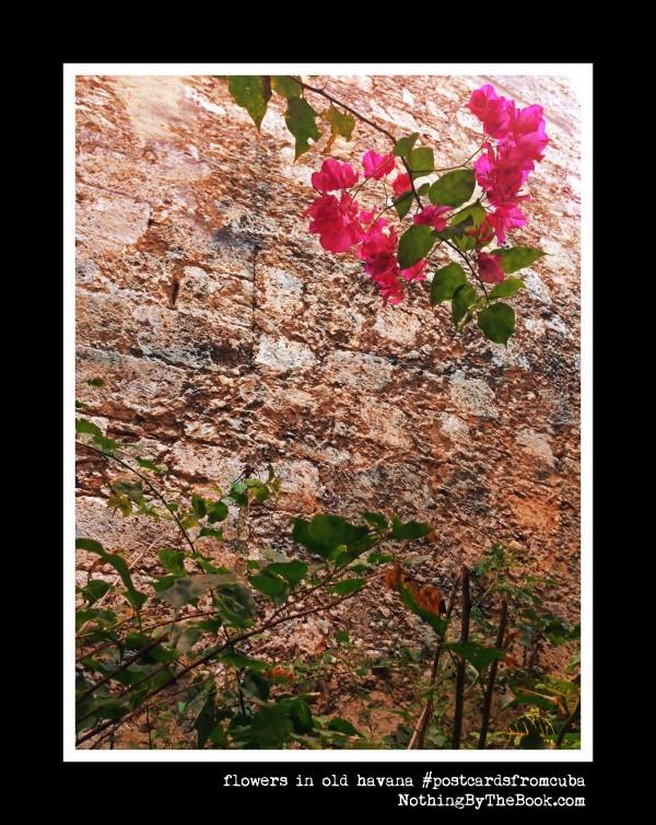 2-8a-pinkflowersinoldhavana