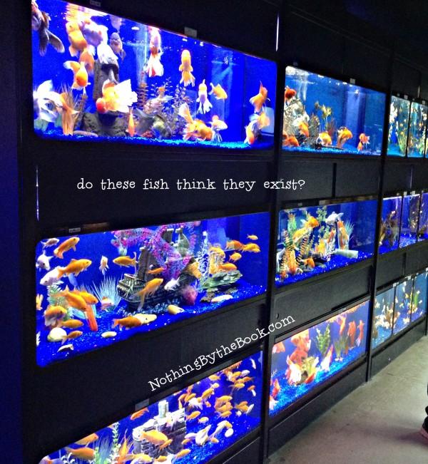 nbtb-do-fish-exist